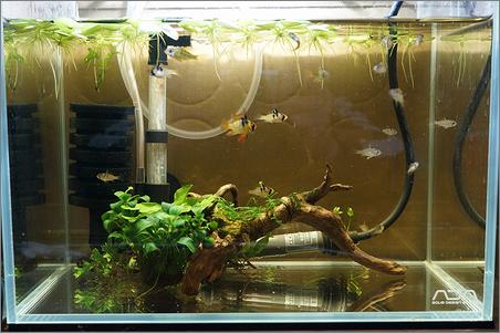 ミニS ラム稚魚水槽